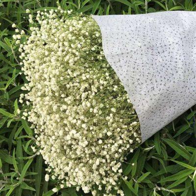 Cách làm hoa khô không mất màu