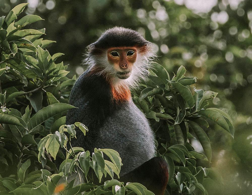 Son Tra Monkey Mountain