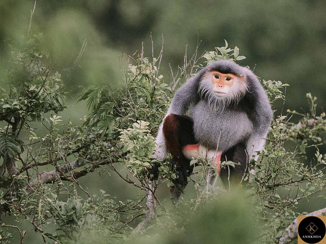 hoi an to monkey mountain 4