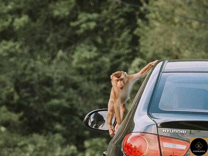 hoi an to monkey mountain 6