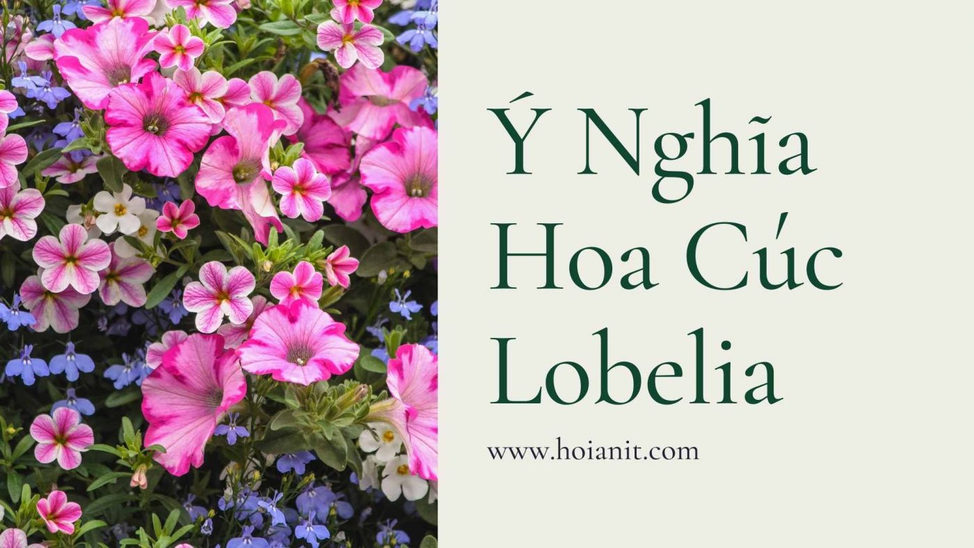 Y Nghia Hoa Cuc Lobelia 3
