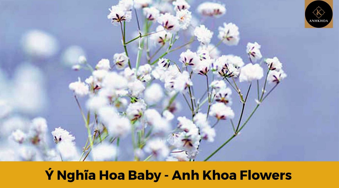 y nghia hoa baby 4