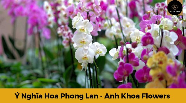 y nghia hoa phong lan 5